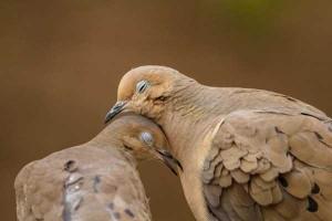 50 Adorable Animal Couples (50 photos) 48