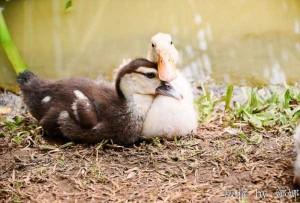 50 Adorable Animal Couples (50 photos) 50