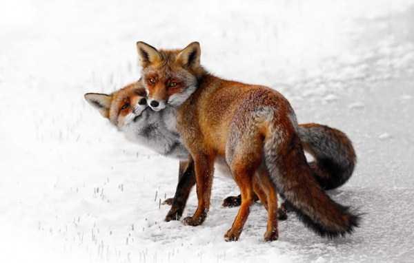 50 Adorable Animal Couples (50 photos) 7