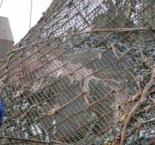 Unexpected Catch in Fishermen's Net (8 photos)
