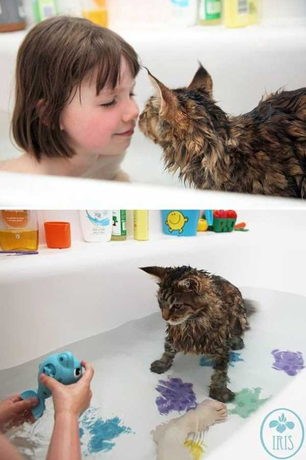 cats-that-love-water (10)