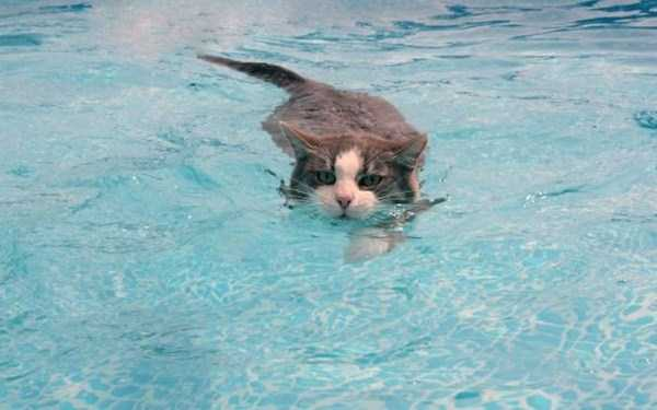 cats-that-love-water (11)