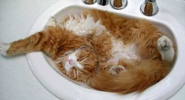 cats-that-love-water (23)