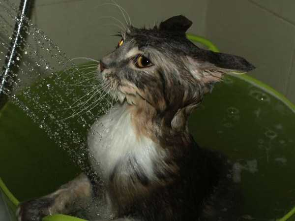 cats-that-love-water (3)