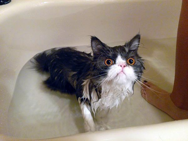 cats-that-love-water-(34)