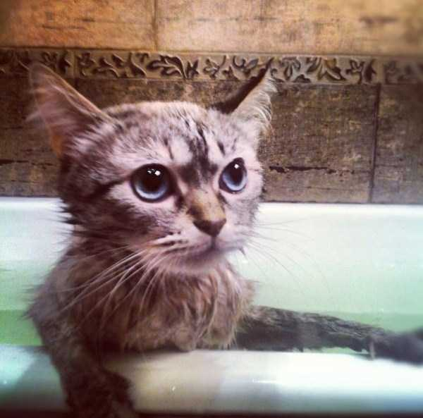 cats-that-love-water (4)