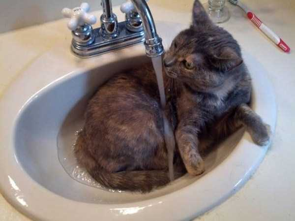 cats-that-love-water (8)