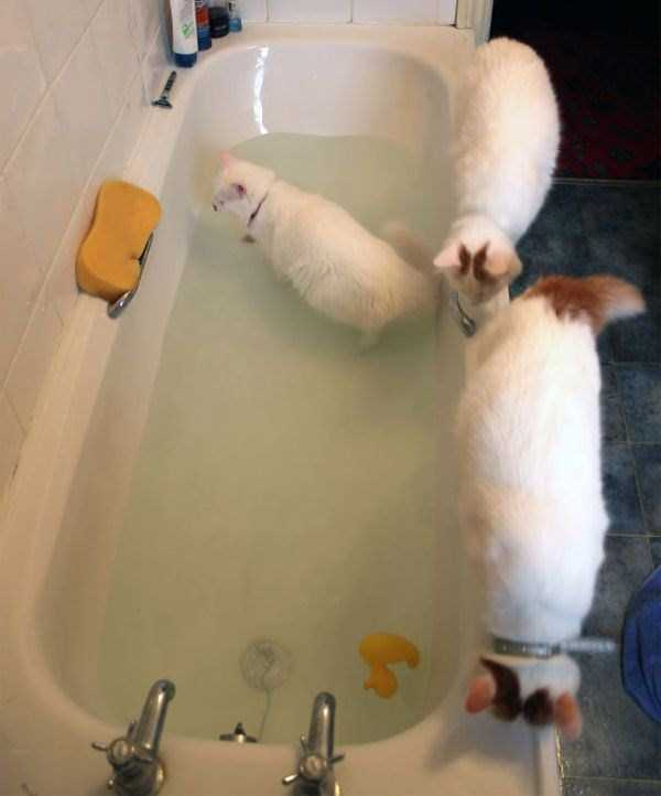 cats-that-love-water (9)