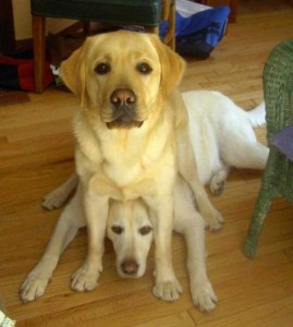 Dogs Being Total Jerks (43 photos) 1