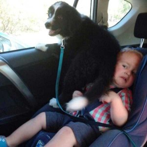 Dogs Being Total Jerks (43 photos) 11