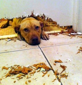 Dogs Being Total Jerks (43 photos) 15