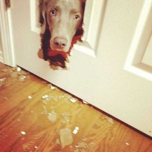 Dogs Being Total Jerks (43 photos) 19