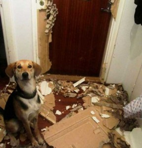Dogs Being Total Jerks (43 photos) 20
