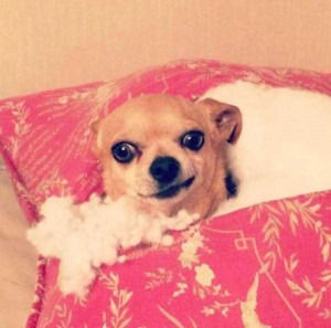 Dogs Being Total Jerks (43 photos) 21