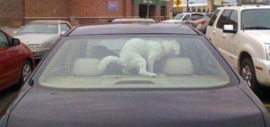 Dogs Being Total Jerks (43 photos) 3