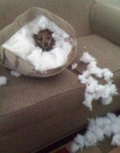Dogs Being Total Jerks (43 photos) 32