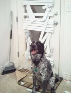 Dogs Being Total Jerks (43 photos) 38