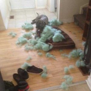 Dogs Being Total Jerks (43 photos) 4