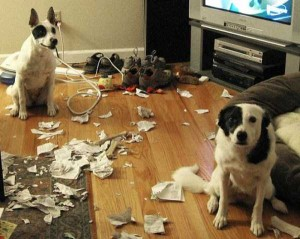 Dogs Being Total Jerks (43 photos) 42