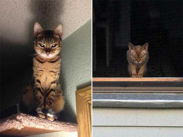 evil-cats (12)