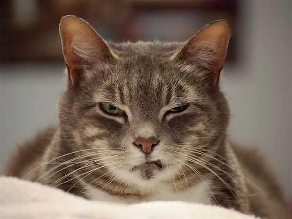 evil-cats (15)