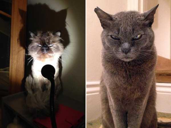 evil-cats (16)