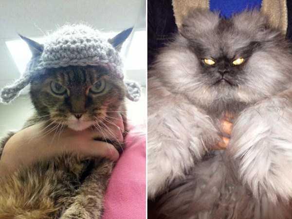 evil-cats (20)