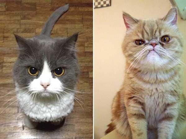 evil-cats (22)