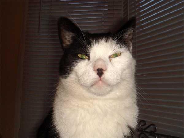 evil-cats (25)