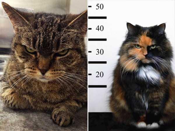 evil-cats (26)