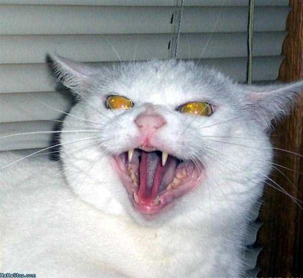 evil-cats (28)