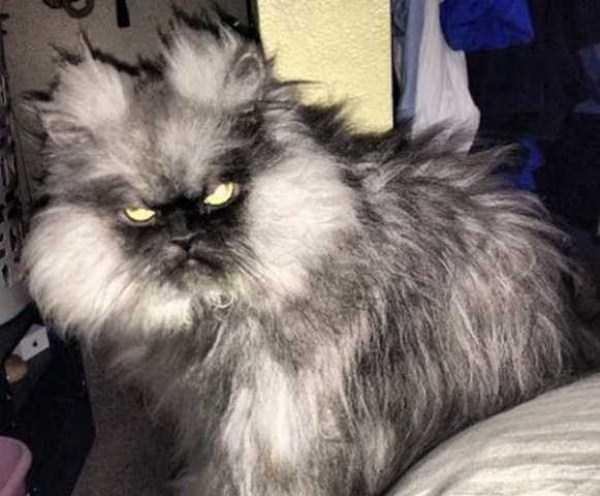 evil-cats (3)