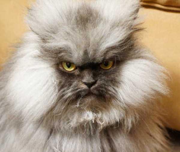 evil-cats (30)