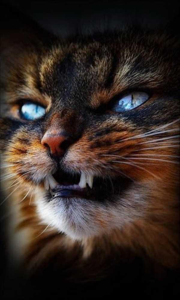 evil-cats (33)
