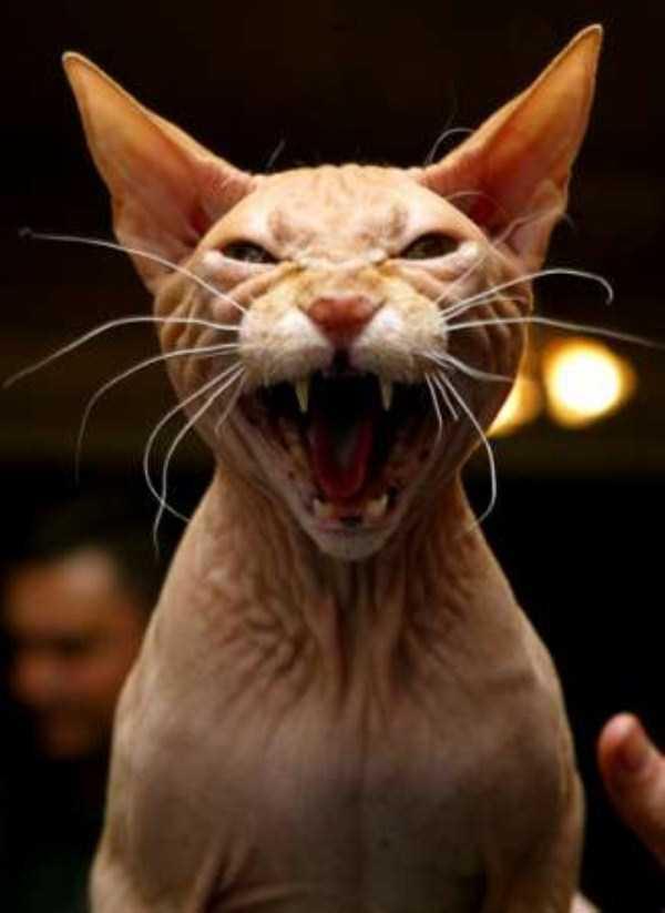 evil-cats (4)