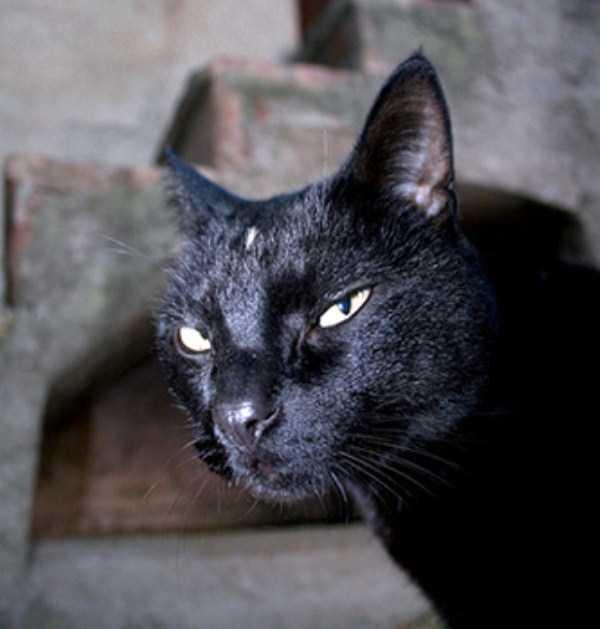 evil-cats (6)