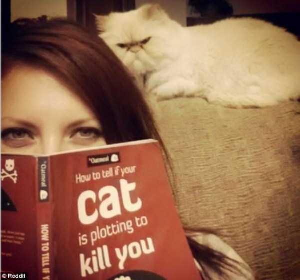 evil-cats (8)