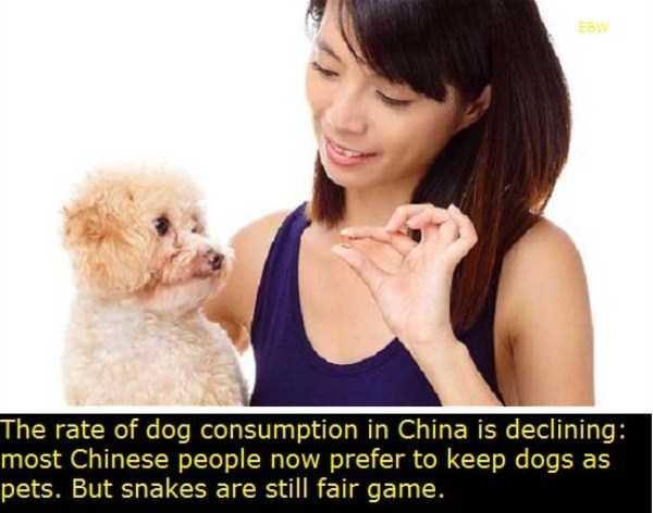 facts-about-china (6)