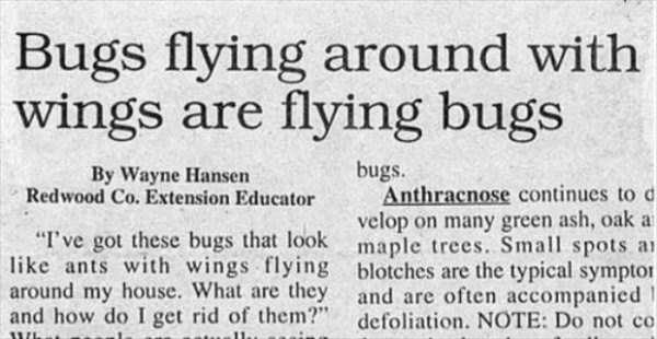 funny-news-headlines (5)