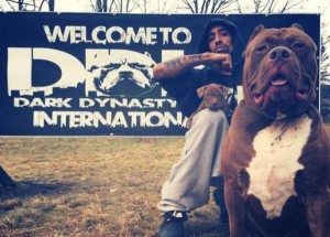 A Pit Bull of Gigantic Proportions (23 photos) 2
