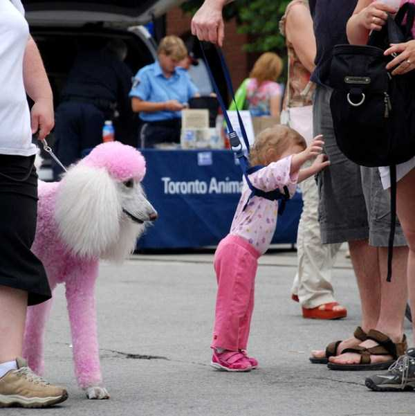 kids-on-leashes (31)
