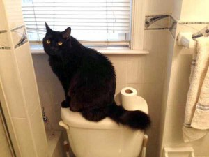 Pets Who Don't Know the Meaning of Privacy (23 photos) 1
