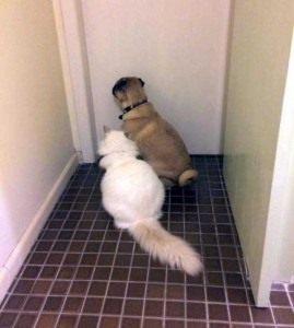 Pets Who Don't Know the Meaning of Privacy (23 photos) 12