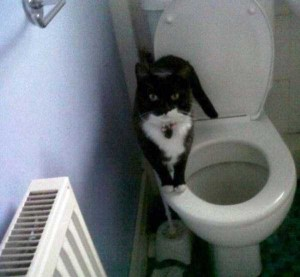 Pets Who Don't Know the Meaning of Privacy (23 photos) 16