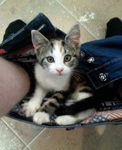 Pets Who Don't Know the Meaning of Privacy (23 photos) 19