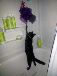 Pets Who Don't Know the Meaning of Privacy (23 photos) 2