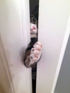 Pets Who Don't Know the Meaning of Privacy (23 photos) 3