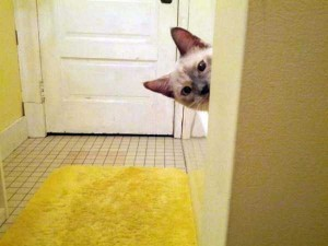 Pets Who Don't Know the Meaning of Privacy (23 photos) 7