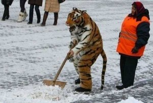 Meanwhile in Russia (30 photos) 20