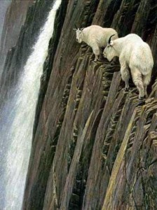These Extraordinary Goats Are Able to Climb Almost Anywhere (25 photos) 22